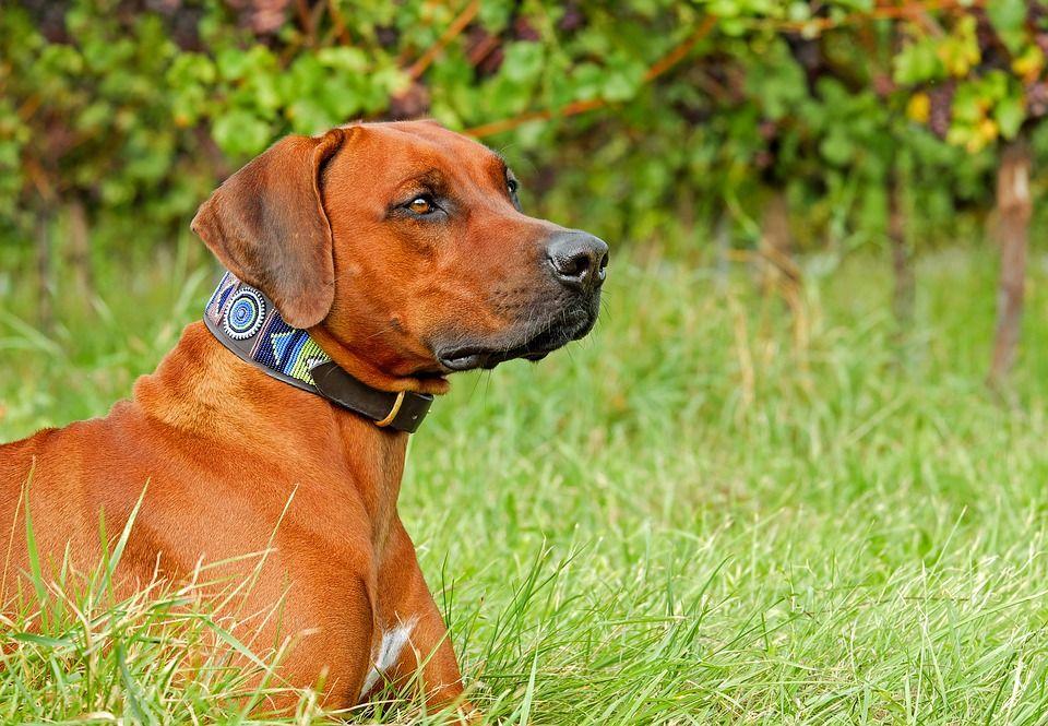 Różne typy obroży dla psa
