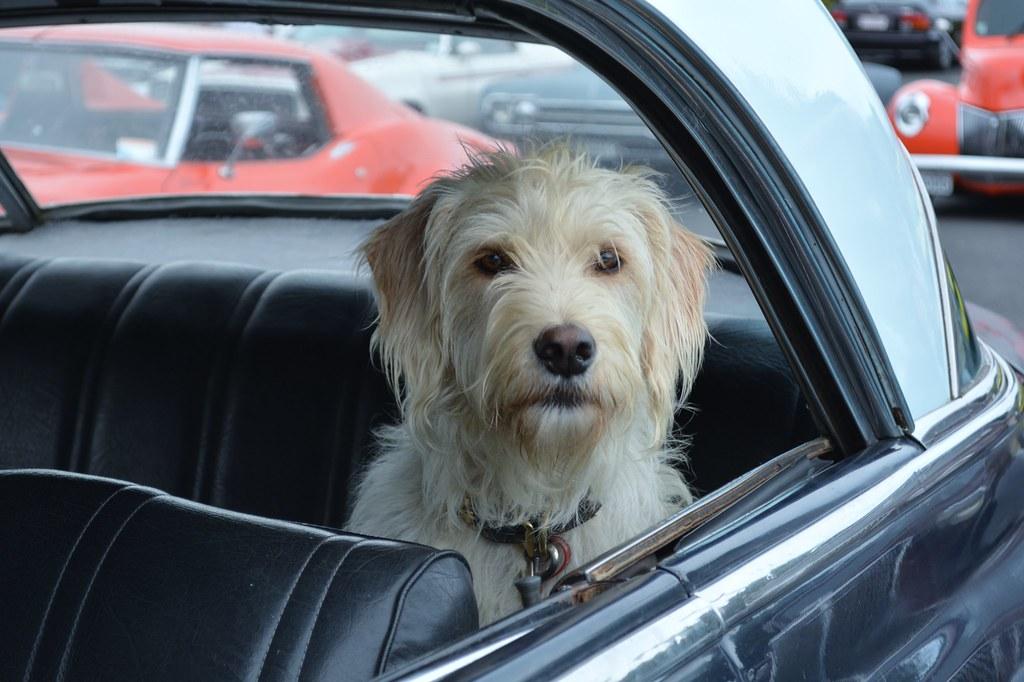 GPS dla psa – bezpieczny powrót do domu